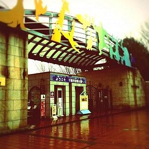 雨の千葉動物園入口
